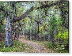Forest In Sleeping Bear Dunes Acrylic Print