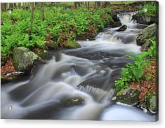 Forest Stream In Spring Acrylic Print by John Burk
