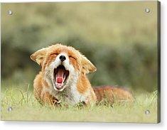 Funny Fox Acrylic Print by Roeselien Raimond