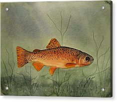 Gila Trout Acrylic Print