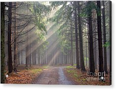 God Beams - Coniferous Forest In Fog Acrylic Print by Michal Boubin