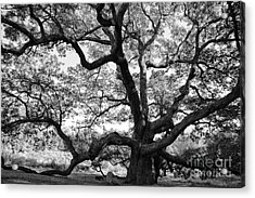 Granby Oak Acrylic Print by HD Connelly