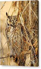 Great Horned Owl Acrylic Print by Dennis Hammer