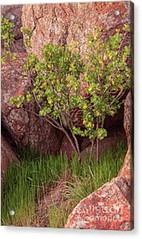 Acrylic Print featuring the photograph Hidden by Iris Greenwell