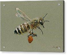 Honey Bee Watercolor Painting Acrylic Print