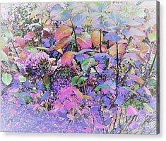 Hydrangea Acrylic Print by Ann Johndro-Collins
