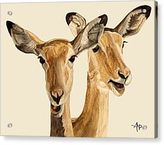 Impalas Acrylic Print