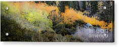 Inyo National Forest Acrylic Print by Richard Smukler