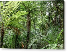 Acrylic Print featuring the photograph Jungle Ferns by Les Cunliffe