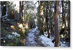 King Billy Forest Cradle Mountain Acrylic Print by Sarah King