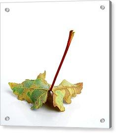 Leaf Acrylic Print by Bernard Jaubert
