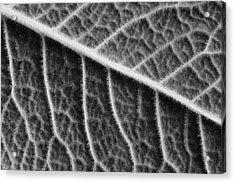 Leaf Acrylic Print by Chevy Fleet