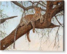 Leopard In Tree Acrylic Print by David Stribbling