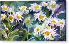 Little Asters Acrylic Print
