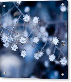 Lonely Winter Acrylic Print by Ryan Heffron