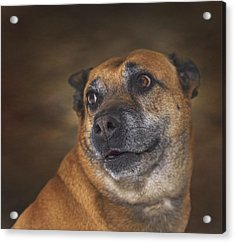 Mabel  Acrylic Print by Brian Cross