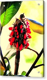 Magnolia Acrylic Print by Aron Chervin