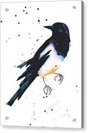 Magpie Painting Acrylic Print by Alison Fennell