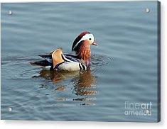 Acrylic Print featuring the photograph Mandarin Duck by Michal Boubin