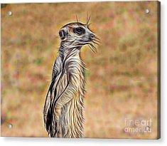 Meerkat Acrylic Print by Marvin Blaine