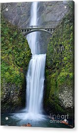 Multnomah Falls Waterfall Oregon Columbia River Gorge Acrylic Print by Dustin K Ryan