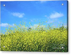 Mustard Beauty Acrylic Print by Timothy OLeary
