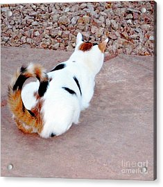 Silly Calico Kitty Acrylic Print