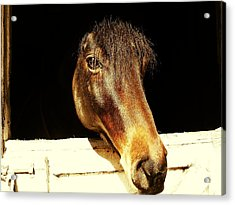 Noble Stallion Acrylic Print by JAMART Photography