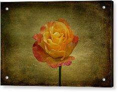 Orange Rose Acrylic Print by Sandy Keeton