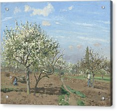 Orchard In Bloom Acrylic Print