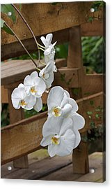 Orchid Acrylic Print by Theo Tan