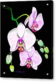 Orchids Acrylic Print by William R Clegg