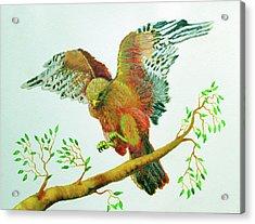 Organic Forrestry Studio Acrylic Print by Forrest C Greenslade PhD