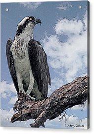 Osprey Acrylic Print
