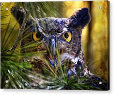 Owl In The Pines Acrylic Print