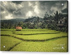 Acrylic Print featuring the photograph Paddy Field by Charuhas Images