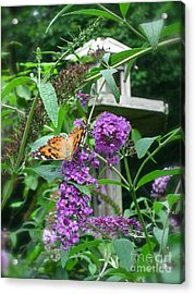 Painted Lady Butterfly Acrylic Print by Nancy Patterson