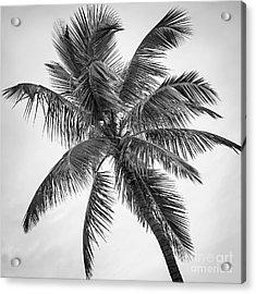 Palm Tree Acrylic Print by Elena Elisseeva