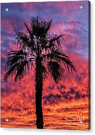 Acrylic Print featuring the photograph Palm Tree Silhouette by Robert Bales