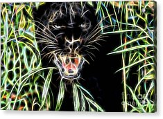 Panther Collection Acrylic Print
