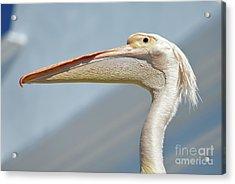 Pelican Acrylic Print by George Atsametakis