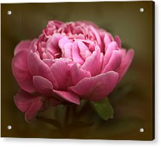 Peony Blossom Acrylic Print by Jessica Jenney