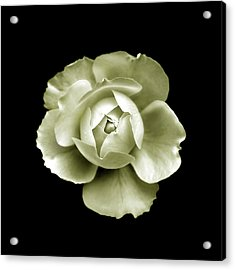 Acrylic Print featuring the photograph Peony by Charles Harden
