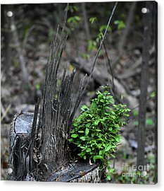 Acrylic Print featuring the photograph Persistence by Skip Willits