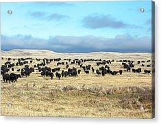 A Herd Gathers Acrylic Print by Todd Klassy