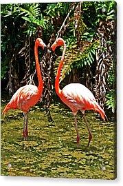 2 Pink Flamingos Acrylic Print