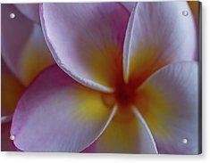 Plumeria Acrylic Print by Roger Mullenhour