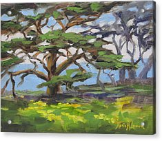 Point Lobos Spring Acrylic Print