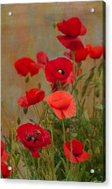 Poppies Acrylic Print by Carolyn Dalessandro