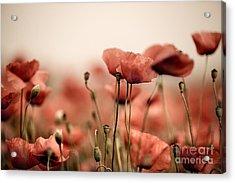 Poppy Dream Acrylic Print by Nailia Schwarz